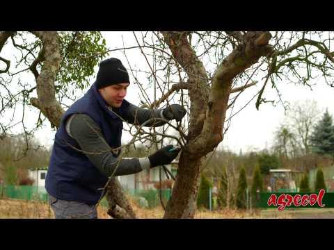 Agrecol - Przycinanie Gałęzi