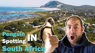 Hunting for PENGUINS | South African Adventures Pt. 2 | Our Trip to BETTY'S BAAI (Betty's Bay)