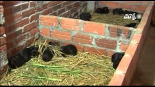 VTC14 | Cẩn trọng khi nuôi chồn nhung đen