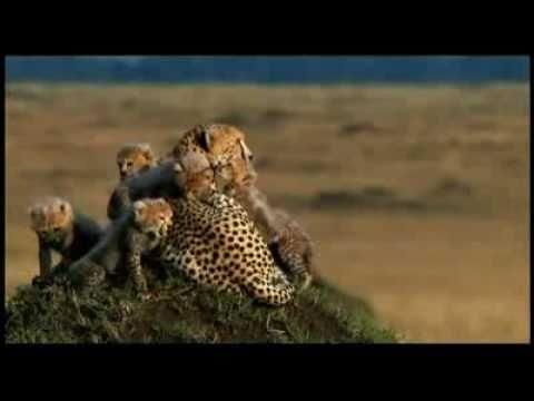 The Kingdom of Animalia - YouTube