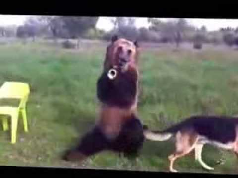 Медведь Дима покорил YouTube! (Very talanted Russian bear Dima)