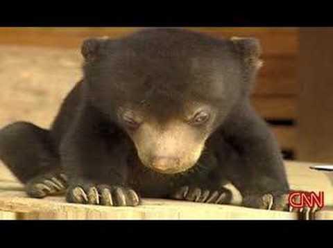 どうにも眠くてたまらない!荷車の上で寝落ちするコグマ