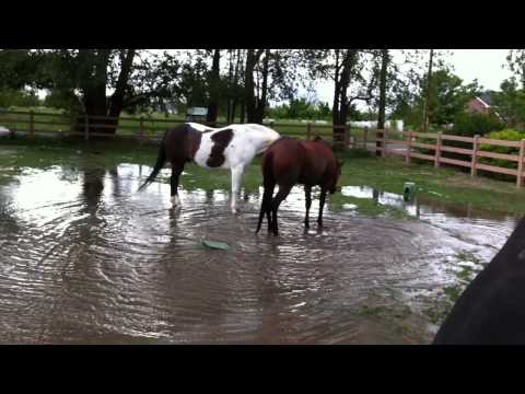 Horses Playing in Water