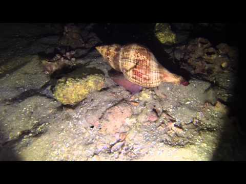 Night diving with Divers Den in Panama City Beach Florida