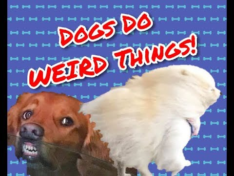 Compilation of Funny Dog Videos
