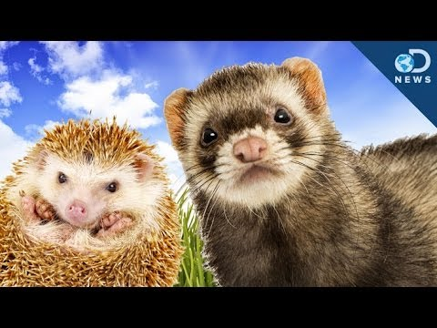 Cute exotic animals as pets