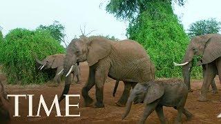 President Trump Reverses Obama-Era Ban Against Hunters Importing Elephant Remains | TIME