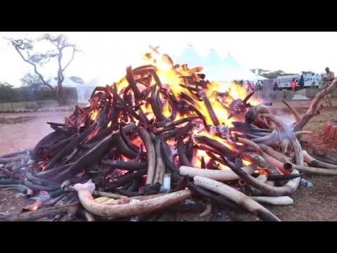 World Wildlife Day-Ivory Burning