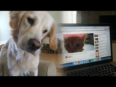 Golden Retriever Watches Kitten Videos on YouTube! (Super Cooper Sunday #49)
