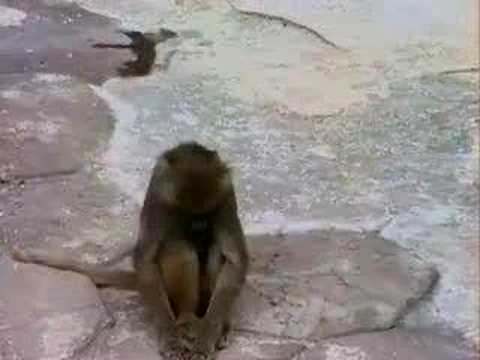 monkey gets scared from his own reflection !