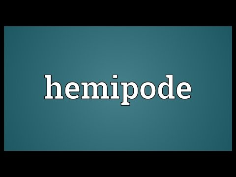Header of hemipode