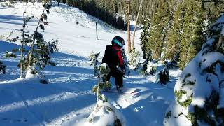 Ashton snowboard through trees @ Mammoth, Knee Deep trail