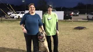 "Cane Corso ""Bubba"" 