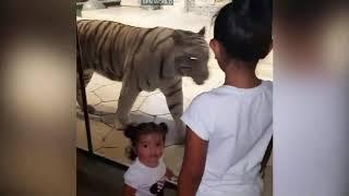 Funny Baby With Funny Lion And Tiger বাচ্চাদের সাথে বাঘ এবং সিংহের দুষ্টুমি না দেখলে আফসোস থেকে যাবে