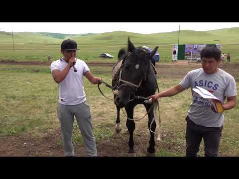 Конные скачки в Хара Шибири