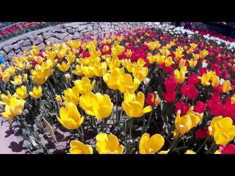 18 апреля 2016 Крым , Ялта #Ботанический сад. Отдых в Ялте www.yalta-rr.com