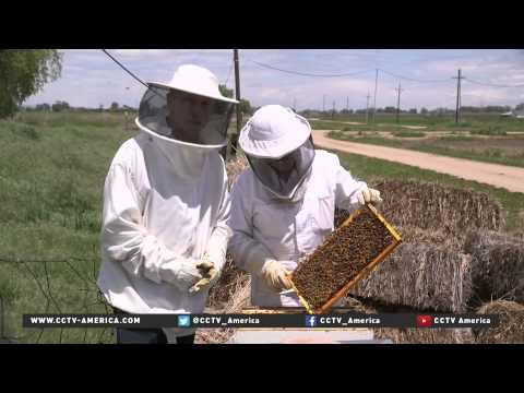 Decline in Honeybee population a growing concern