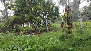 On utube today Cambodia South Asia a lot of rain all days Cambodia News New 2019