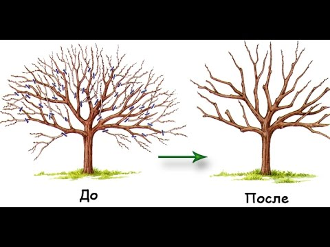 Обрезка плодовых деревьев для начинающих