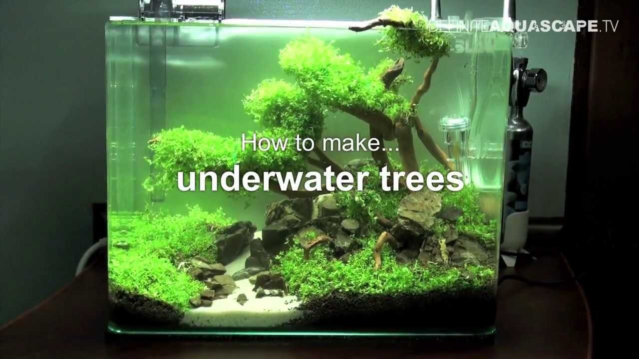 Aquascaping - How to make trees in planted aquarium - YouTube