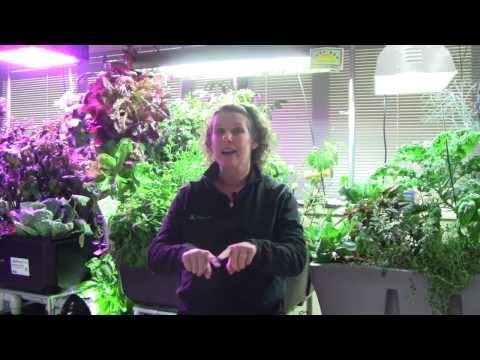 Grow Lighting for Aquaponics Part 1