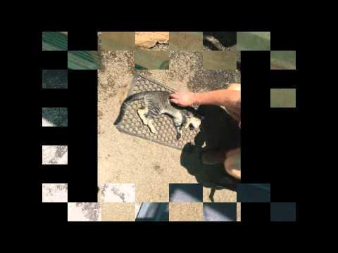 K.A.R.E. Group Qld-Mareeba Animal Refuge-2nd November,2014