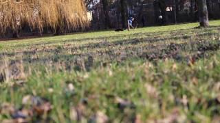 Watch Peter Bradley Adams Little Stranger video