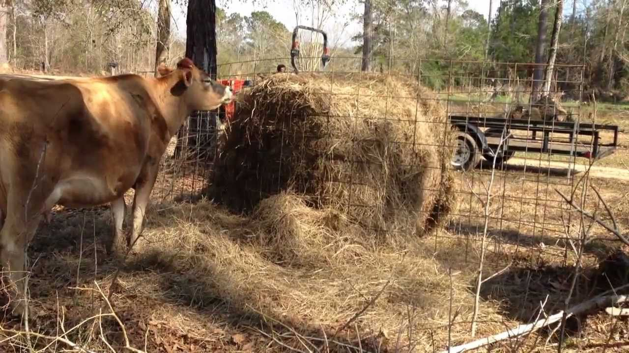 How To Protect A Round Bale Of Hay With Livestock Fence