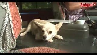 Chú cún tự bắt xe buýt đi chơi   SAIGONTV