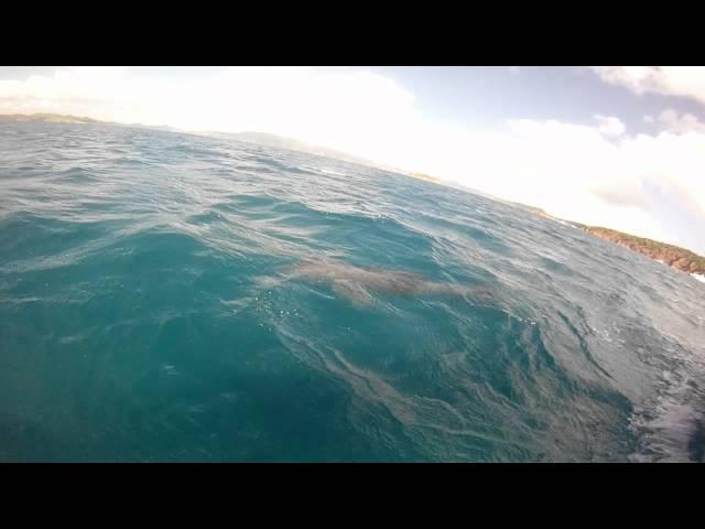 St. Thomas Boat Rentals - Dolphin Encounter