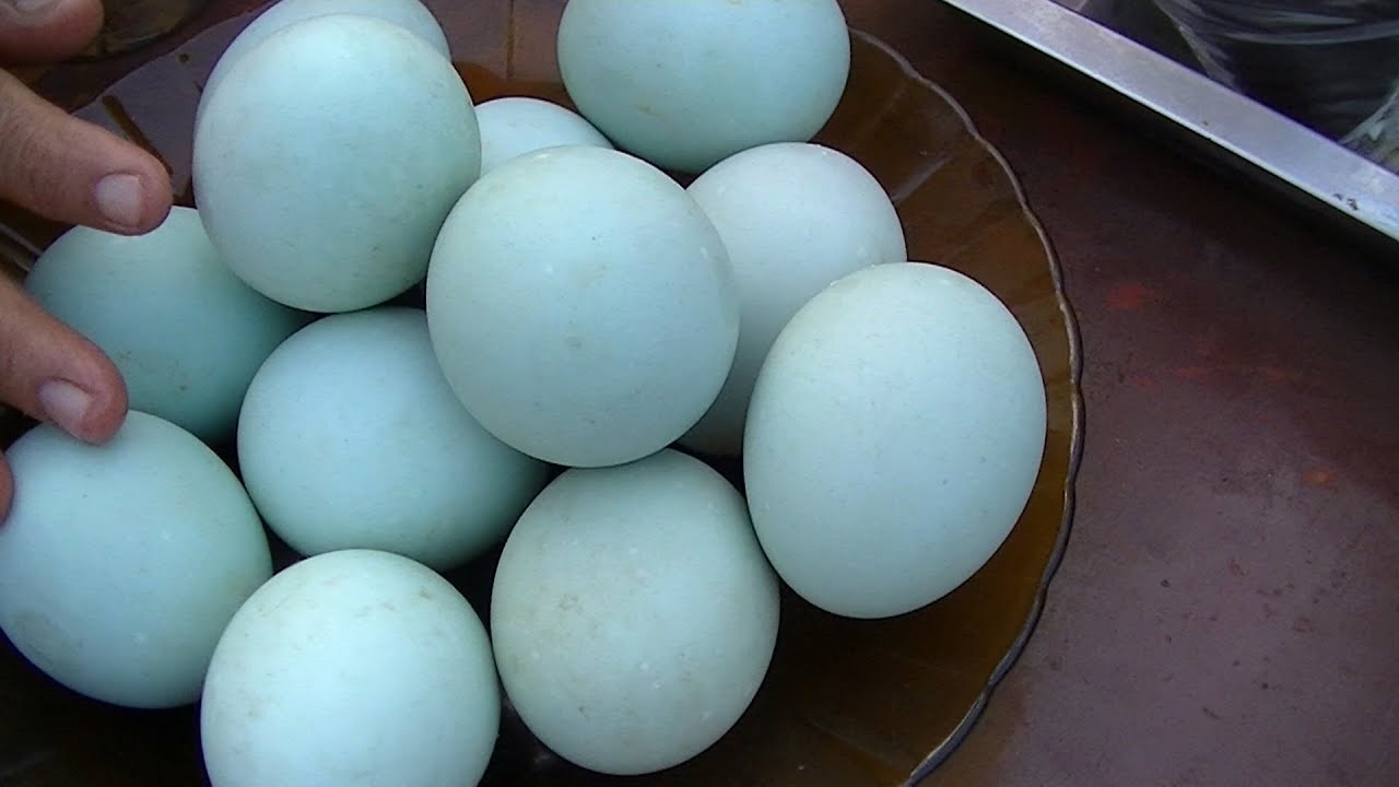 Duck Eggs Daily: Raising Happy, Healthy turally Pictures of duck eggs
