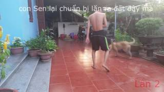 pretending to stroke, test my pet