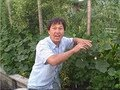 How to Prune Your Cucumbers to Grow them Vertically up a Trellis