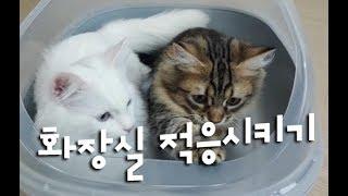 새로운 화장실적응시키기! 집인줄 아는 귀여운고양이들! 노는아빠 집사 브이로그(VLOG)