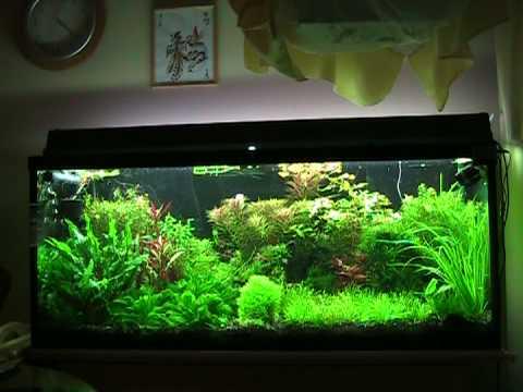My Planted 59 Gallon Hagen Tank Youtube