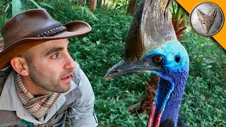 Man vs Cassowary!