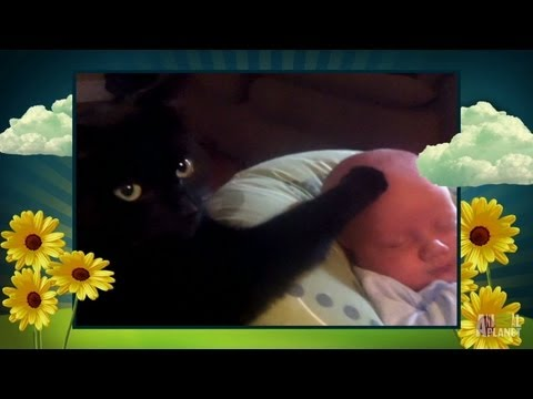 The Baby Whisperer | America's Cutest Pet