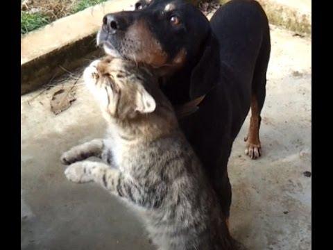 Kedi Kopek Aski -  Cat&dog In Love video