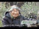 オリーブ島のマドンナ 94歳の小豆島在中のおばあさんから温かいメッセージ