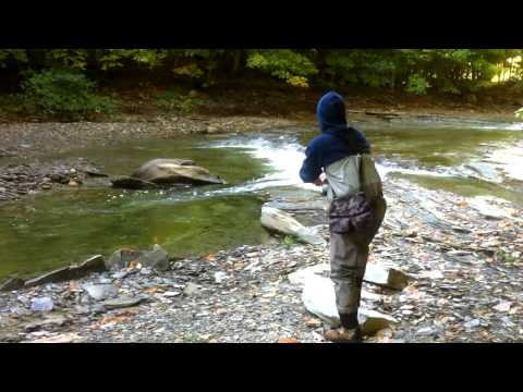 Pennsylvania Steelhead Fishing - Lake Erie Tributaries