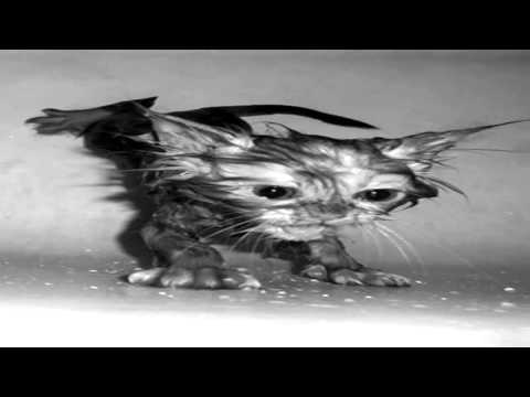 Wet Pussy Or Fishing Hook Caught In Eyeball video