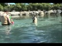 sting rays discovery cove.wmv