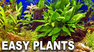 My Top 10 Easy Beginner Aquarium Plants