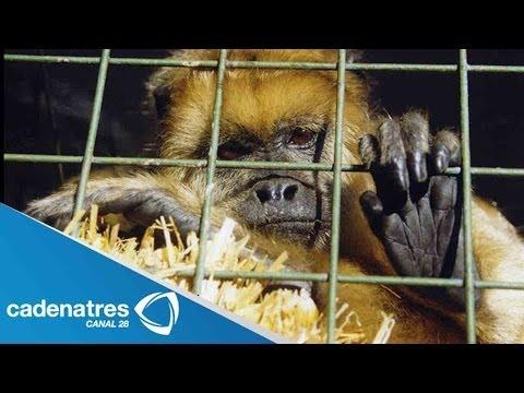 Kate del Castillo pide a los circos que no usen animales en sus actos / PETA