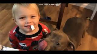 *Try Not To Laugh Challenge* Funny Dogs Compilation [MUST SEE] Funny Dog Videos & Vines 2019