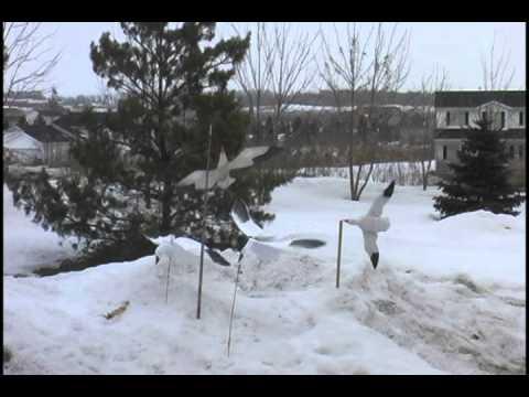 snow goose vortex machine