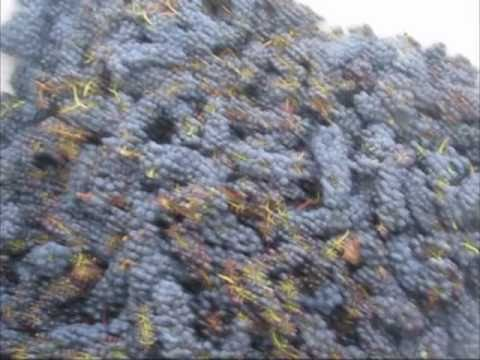 Commercial Wine Production 1/2