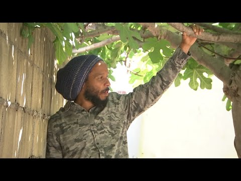 Ziggy Marley: Legal marijuana comes with 'responsibilities' for growers, sellers