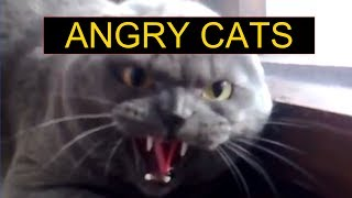 Angry Cats Compilation - Funny Cats Compilation