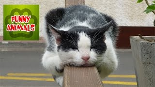 Lazy cats just don't want to walk - Lazy cats compilation